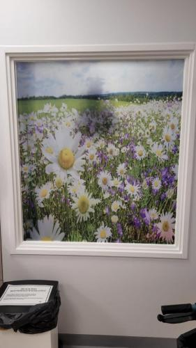 Daisies window